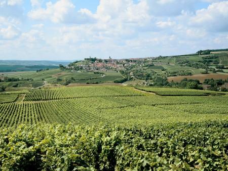 Vignoble, Chatillon sur Marne / © P Guerin Coll. CDT Marne