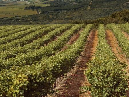 Sejour gourmand au coeur des vignes / © DR