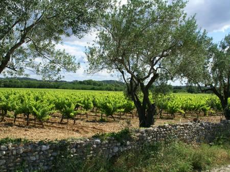 Piémont vigne et olivier / © DR