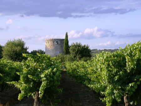 Vigne et moulin Bourdic / © DR