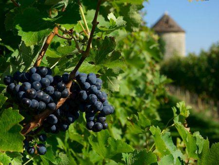 Vigne Gers ©Collection Tourisme Gers:Château de Mons